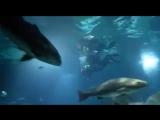 погружение с аквалангом к акулам