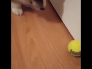 Знакомство с мячиком