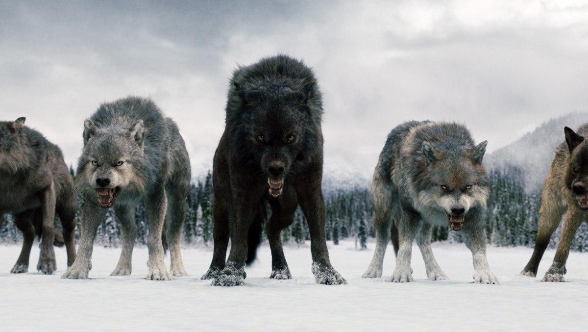 фото на аву волки стая происходит
