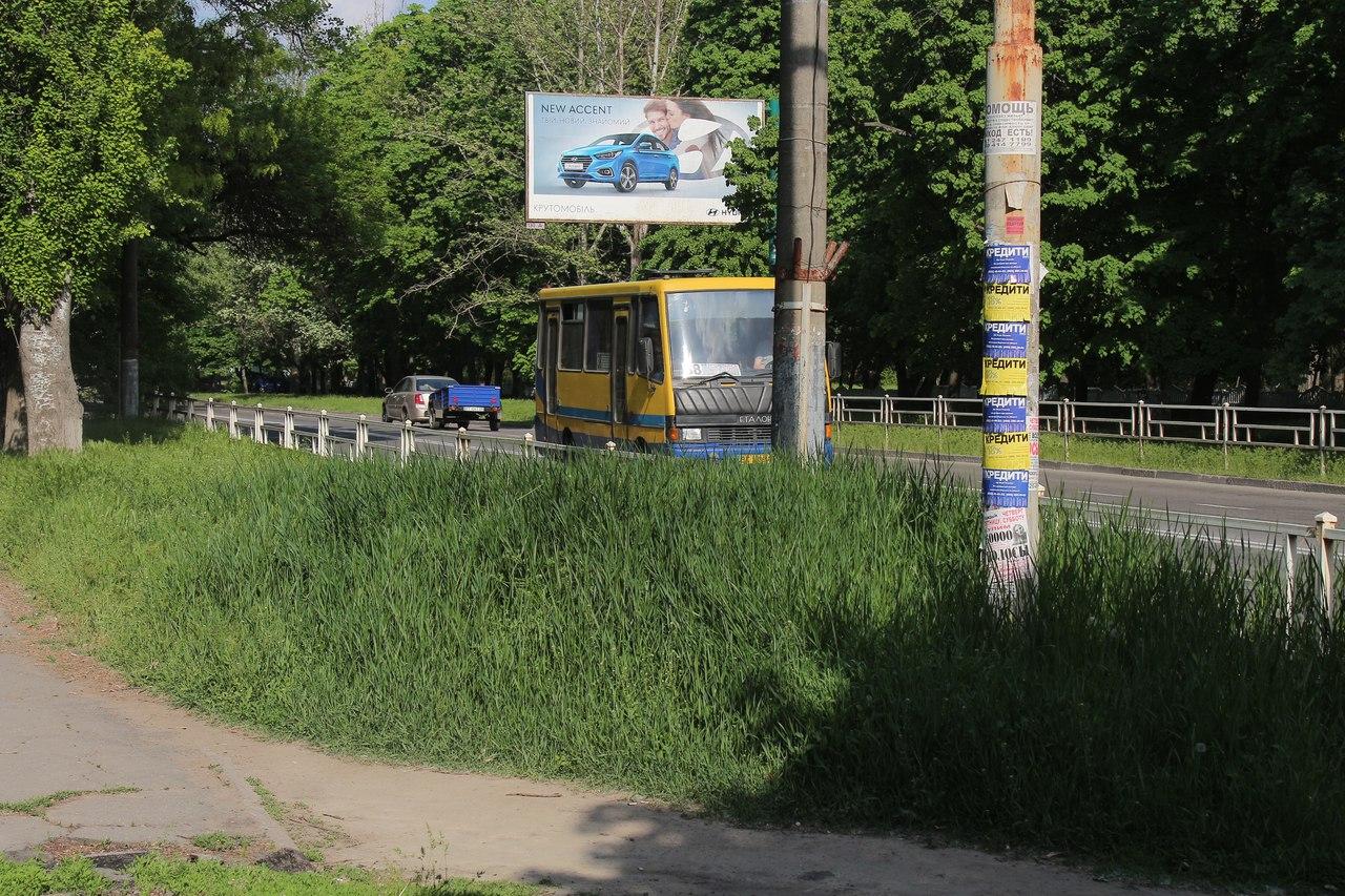 На центральных улицах Херсона уже трава по пояс