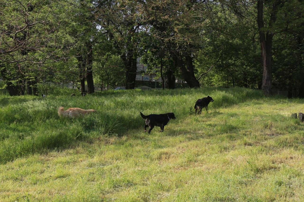 В Херсонском парке бродят стаи агрессивных собак