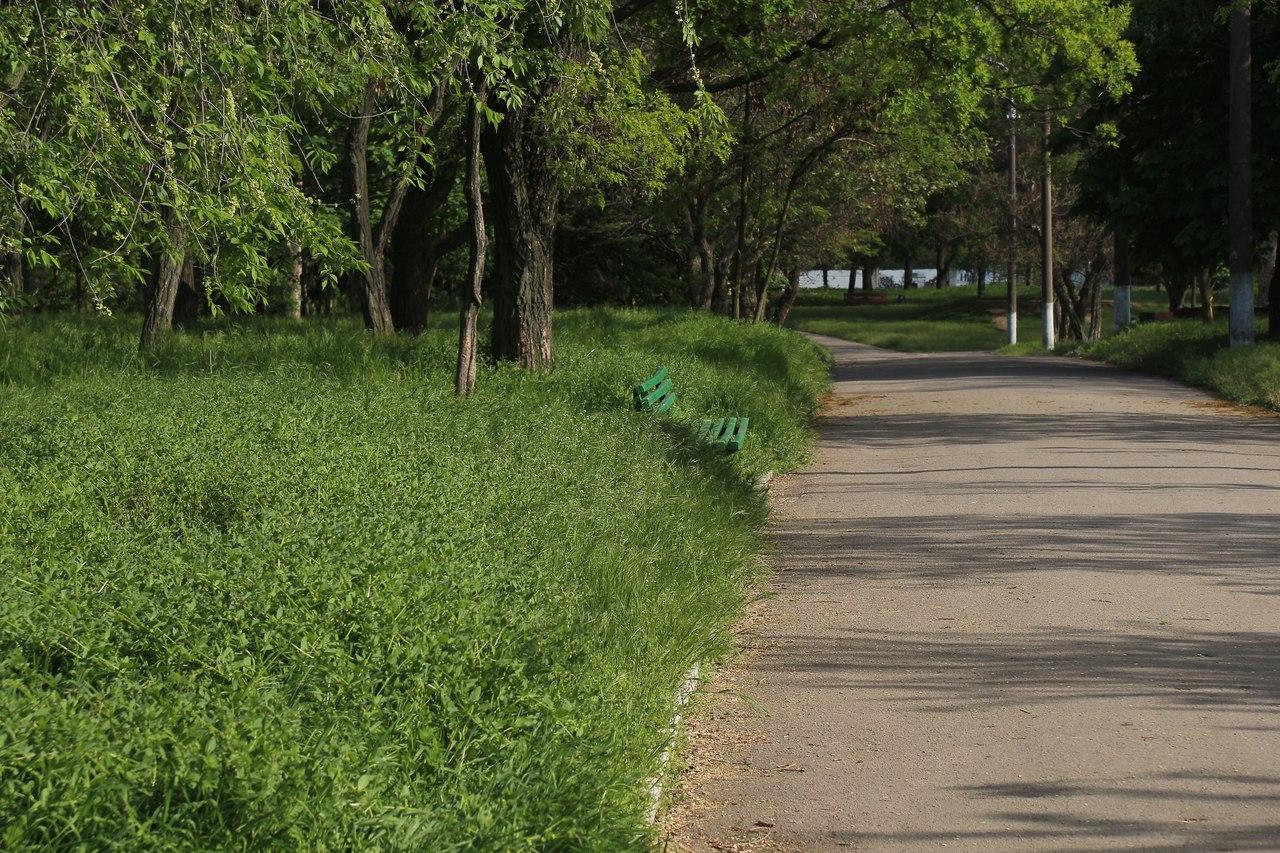 В городском парке не видно лавочек и повсюду мусор