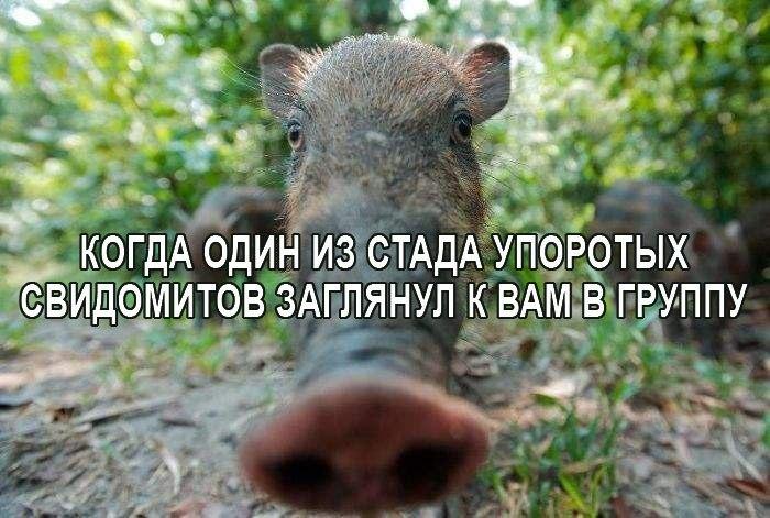 https://pp.userapi.com/c836133/v836133871/6bcf9/1zSuAWpFvDE.jpg