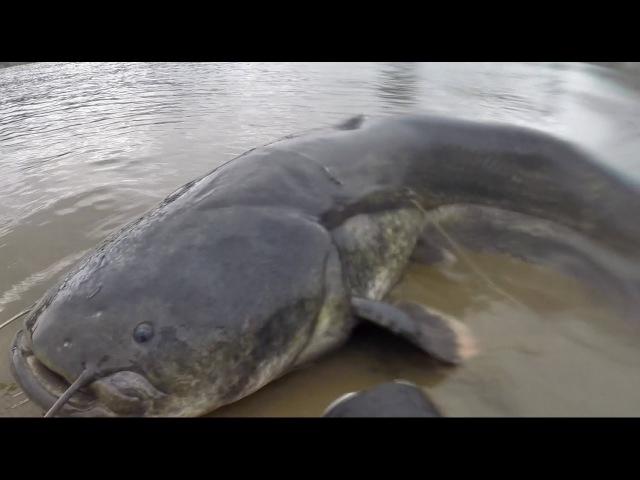 в поисках Трофейного сома ч.5 речной МОНСТР.Подводная охота на сома 2017.