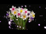 23.1: Làm hoa thủy tiên bằng giấy nhún - Narcissus paper flower tutorial