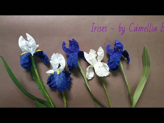 DIY- Paper Iris flowers from crepe paper-Flor del iris del papel crepe