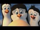 Пингвины из Мадагаскара на памирском языке