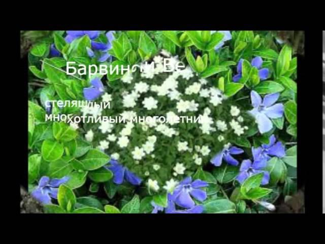 Многолетние садовые цветы, цветущие всё лето. Фото и название.