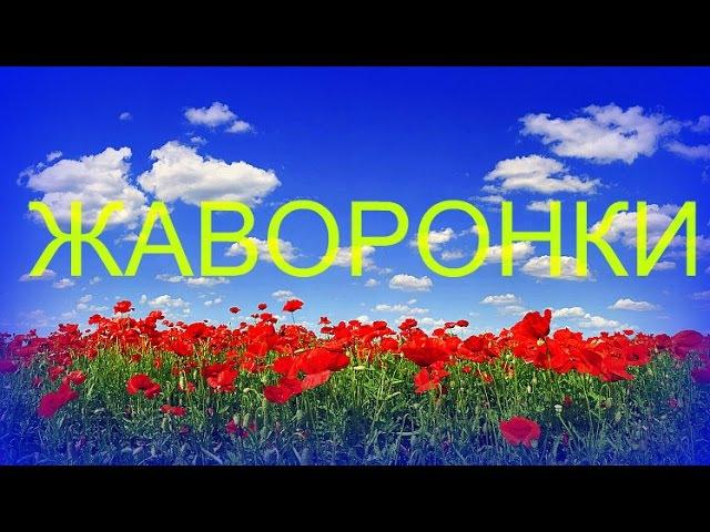 Жаворонки Полевые Russian Field Lark Singing