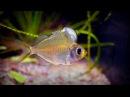 5 стеклянных аквариумных рыбок