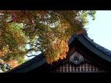 京都 宇治神社(2016-11)Uji-jinja Shrine in autumn, Kyoto