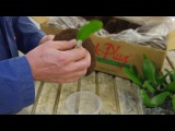 Quick PlugXcellent Horse Shoe Plug