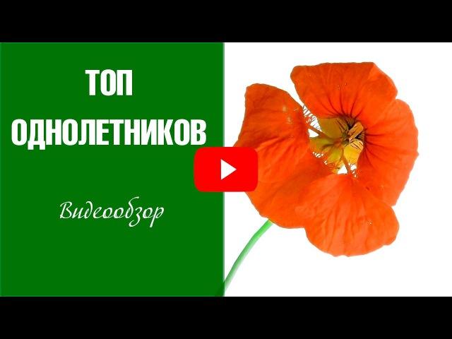 Однолетние цветы 🌼 ТОП-9 самых неприхотливых