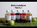 Рубрика Поставщики - Комбуча
