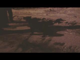 Ручные лисы на НПС-2