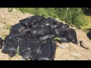 Свалка трупов животных на верхнепышминской дороге