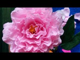 How to made  paper peony h