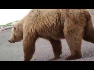 Это не прикол! Бежать поздно! The Bears.Running late.Two Meters from death