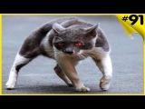 Дворовые коты приколы Топовая подборка с котами Русские приколы коты дерутся