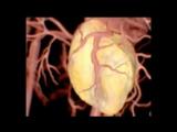 Вплив алкоголю на 3 органи людини Max Ukas video