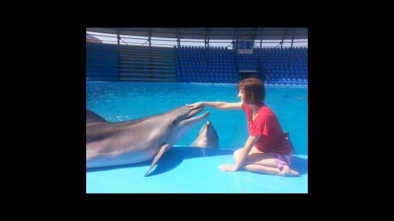 Дельфинарий в Архипо- Осиповке 2016