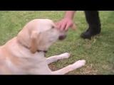 Когда ты знаешь как поладить с собакой