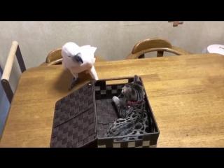 Подарок для попугая