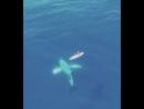 SUP серфинг магическая штука. Неизвестно куда она тебя заведет.