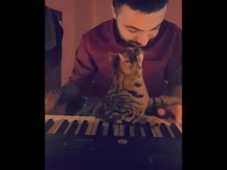 Музыка для кота