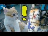 Рыжик на птичьем рынке нашел котенка от Куки