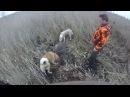 Охота на кабана в камыше с лайками 2015.
