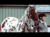 Appaloosa horse music video I