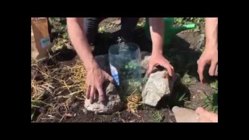 Метод Валерия Го посадки саженцев деревьев со 100% приживаемостью