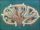 Лимфатические узлы Академик М Р Сапин © The lymph nodes