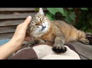 Говорящая кошка Мерцелла