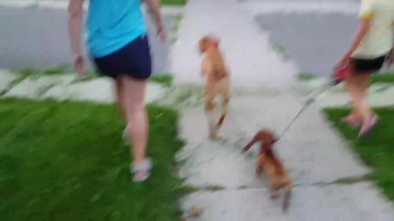 Паффин выгуливает Тосу