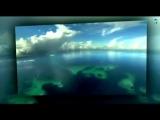 Мелодии экрана - из к_ф Человек-амфибия (клип) (1)