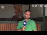 Репортер и лошадка