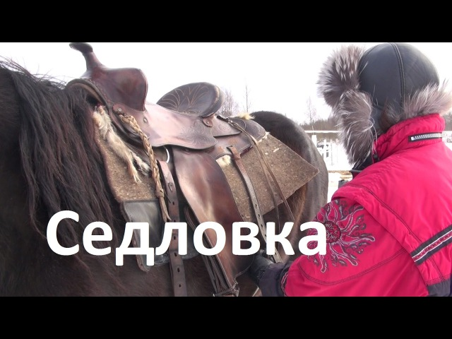 Седловка лошади вестерн седлом.