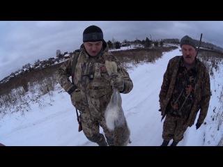 Охота на зайца Часть 1 (сезон 2016-2017гг) Hunting the hare