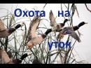 Охота на уток  №1.  Duck Hunting