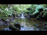 8 Hours Calming Nature Sounds-Sound of Water Relaxation-Birdsong Meditation-Johnnie Lawson