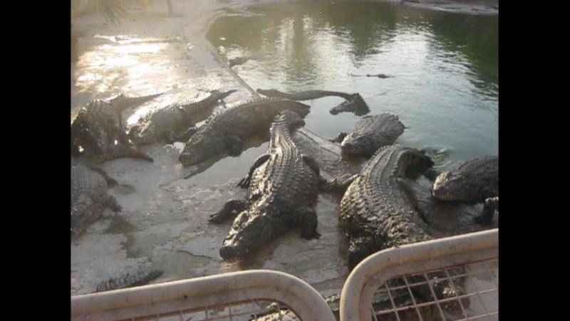 ужин Туниских крокодилов!