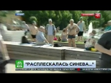 Корреспонденту НТВ в прямом эфире рассказали, что такое ВДВ