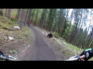 В Словакии медведь напал на велосипедиста