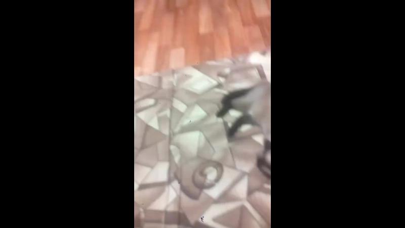 Смотрю как мой кот спит