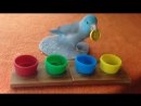 Charlie the Parrotlet Sorts Colored Buttons