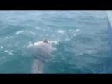 Украинской пловчихе не удалось переплыть Ла-Манш