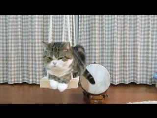 Кот на качелях
