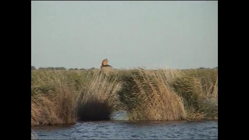 05.Озеро Беляниха 2009. День 4-й
